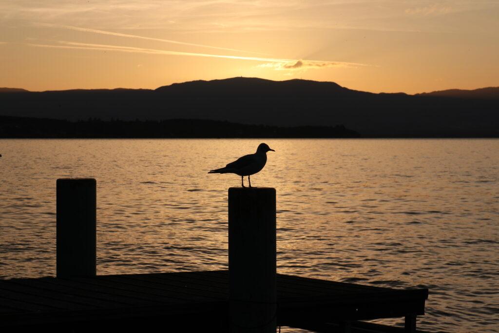 Sonnenuntergang mit Vogel
